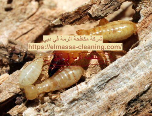 شركة مكافحة الرمة في دبي |0547309049| مكافحة حشرات